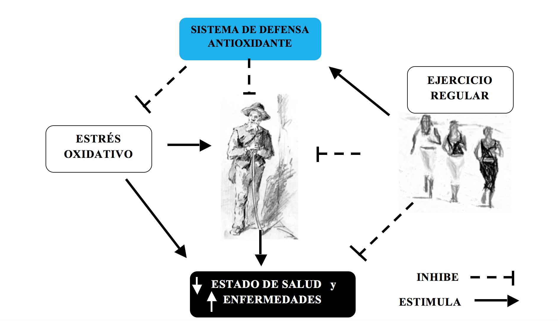 Fissac _ Ejercicio, estrés oxidativo