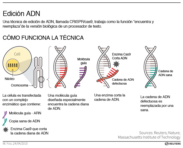 Edición ADN crispr